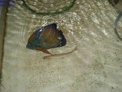 Ikan016
