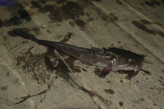 Ikan023