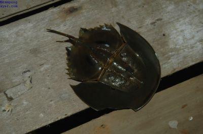 Ikan033