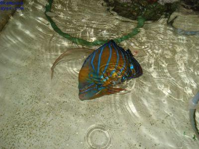 Ikan044