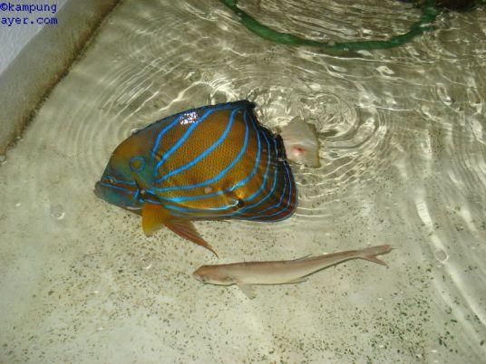 Ikan045